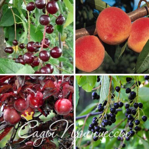 Гибриды плодовых деревьев